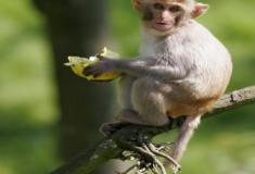 Como os animais conseguem subir em árvores?