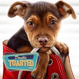 Os 10 cães mais determinados do cinema