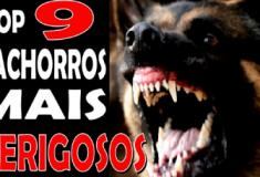 9 raças de cachorro que parecem dóceis mas são perigosos