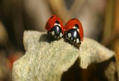Os insetos e as estações