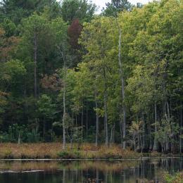 Como as árvores podem salvar a Terra das alterações climáticas