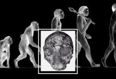Crânio de Homo Sapiens com mais de 200 mil anos é encontrado na Grécia
