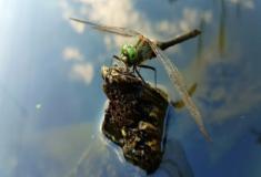 Os insetos e sua conquista dos habitats