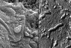 Outro meteorito de Marte que mostra sinais de vida orgânica