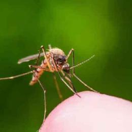 Os repelentes de mosquitos ultrassônicos funcionam?