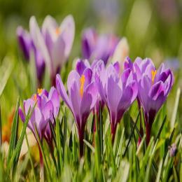 Qual a condição de sol para cultivar uma planta perene?