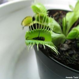 Será mesmo que as plantas sabem contar?