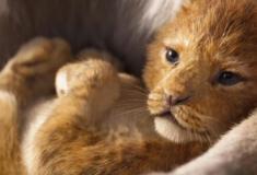O novo O Rei Leão vale a pena?