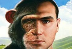 Cientistas criam primeiro macaco-humano em laboratório