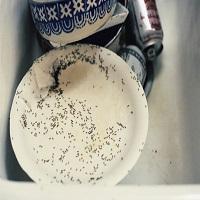 Vinagre, cravo, café: como acabar com as formigas sem usar inseticida