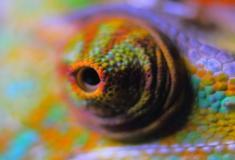 """""""Pele de Camaleão"""" artificial que muda de cor alimentada por nanomáquinas"""