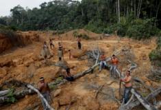 Amazónia destruída pelo homem e pelo fogo