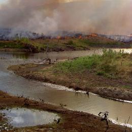 Cientistas alertam para o colapso a floresta amazónica
