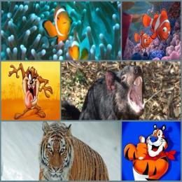 Quais animais inspiraram os personagens dos desenhos?