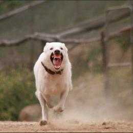 Leia a crítica do clássico Cão branco, sobre um cão racista
