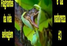 Flagrantes da vida selvagem e da natureza #3