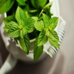 O retorno das ervas e plantas medicinais