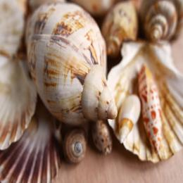Gastrópodes marinhos
