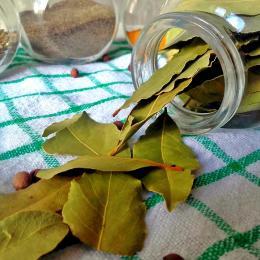 Os benefícios das folhas de louro