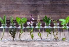 Cultive 8 ervas aromáticas na sua cozinha
