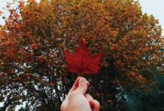 Inspiração: Árvores