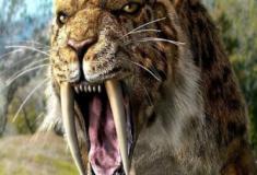 Os destemidos tigre-dentes-de-sabre