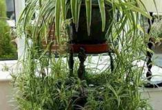 Oito plantas de interior ideais para os descuidados