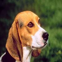 As 6 doenças mais comuns em cães e gatos