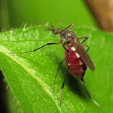 Mulheres e crianças infectadas por Zika desenvolveram imunidade ao vírus