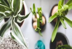 Aprenda a fazer um tipo de rega simples e eficiente para suas plantas