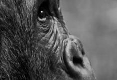 O que é a extinção das espécies?