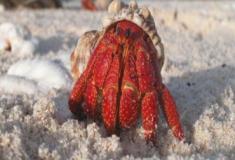Crustáceos surpreendentes