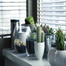 Aprenda da maneira certa como ter plantas em casa, e cuidar bem delas