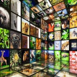 Por que devemos classificar os seres vivos?