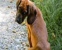 Estudos mostram que cachorros podem aumentar sua expectativa de vida