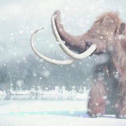 Cientistas encontram evidências sobre a extinção dos grandes mamíferos
