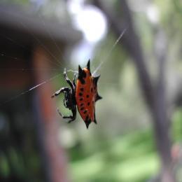 Aranhas espetaculares