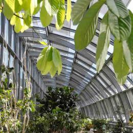 Edifícios vivos poderão ser as casas do futuro