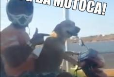 Cachorrinho mototoqueiro