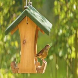 Comedouros criativos para pássaros