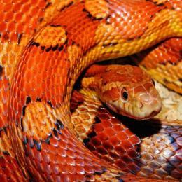 As cobras através da história