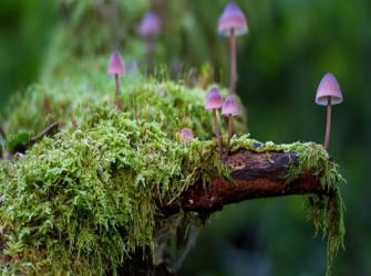 Os cogumelos mais comuns - Parte #2