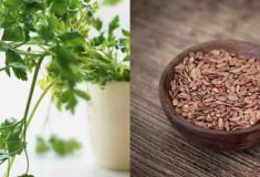 Dez alimentos que deve consumir pela sua saude