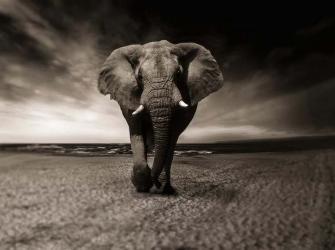 O que é uma extinção em massa e estamos a viver uma agora?