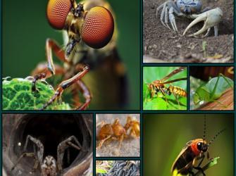 Mitos e verdades: insetos e outros artrópodes