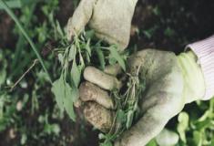 Como cultivar as ervas e plantas em um solo saudável?