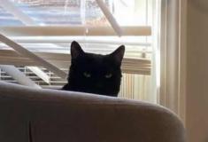 Quando o gato faz bagunça