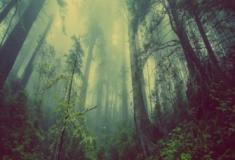 A destruição do ambiente natural: Florestas tropicais e a exploração humana