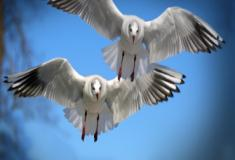 Sistema sensorial das aves