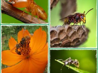 A vida dos insetos sociais